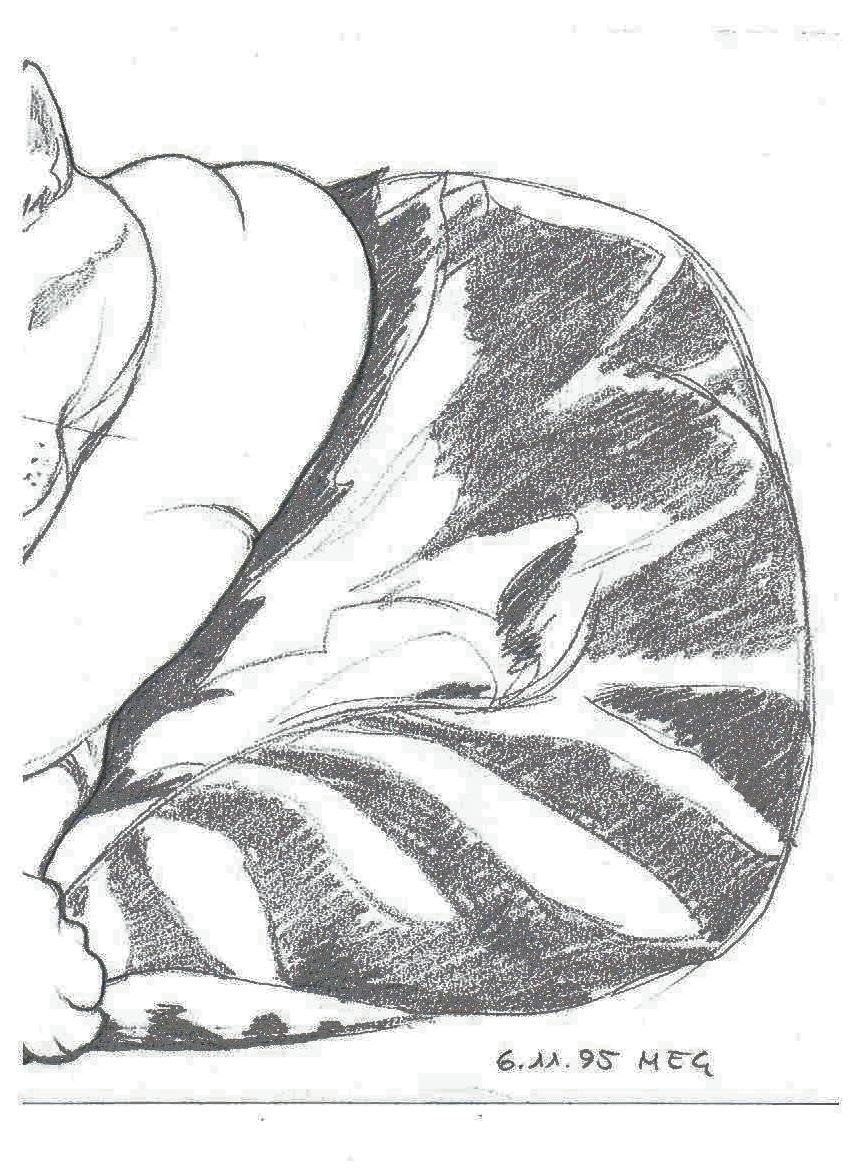 Großzügig Katze Anatomie Dissektion Zeitgenössisch - Anatomie Ideen ...
